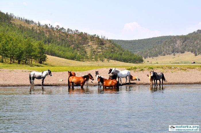 Лошади на берегу Байкала